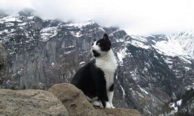 The Cat in the Ghat – Si Kucing di Pegunungan Ghat | Ambika Rao | Terjemahan Bayu Andika Prasatyo